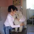 Zsezse Kutyakozmetika - Seregi Alexandra kutyakozmetikus