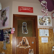 Pacsi Kutya és Cica Kozmetika