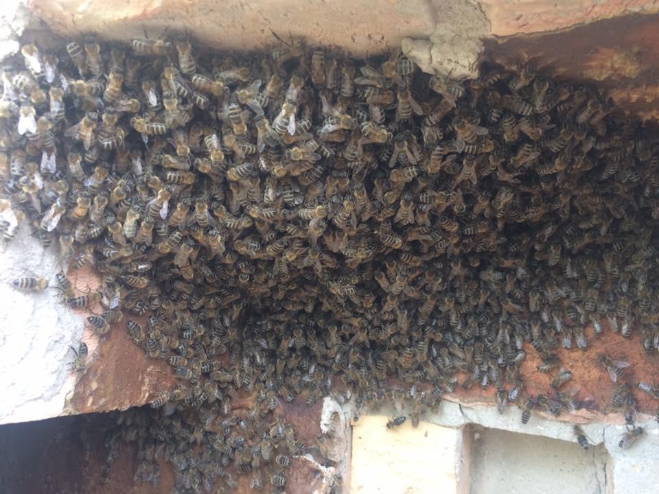 Több ezer méh költözött be a házba