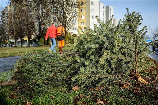 (fotó: Czeglédi Zsolt - MTI)